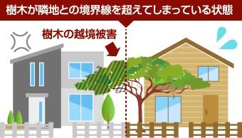 越境とは樹木が隣地との境界線を越えてしまっている状態