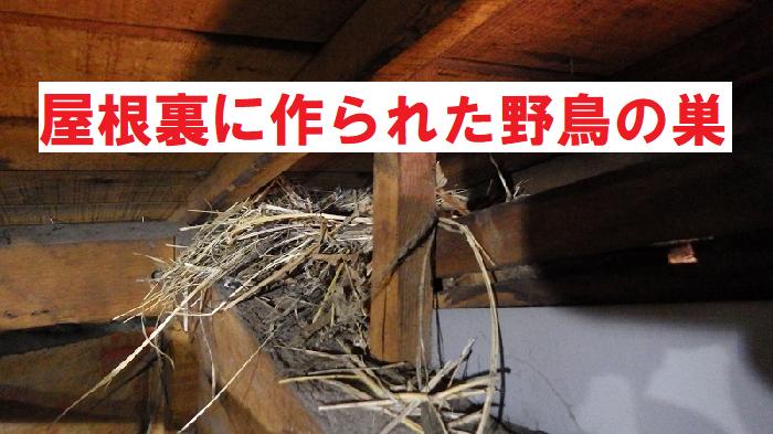 軒天の穴あき部分から動物が侵入し巣を作った