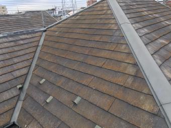 コロニアル屋根の苔