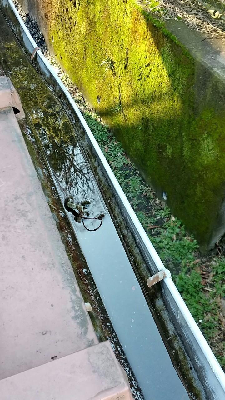 ゴミが溜まった雨樋、雨水が溜まって流れない雨樋